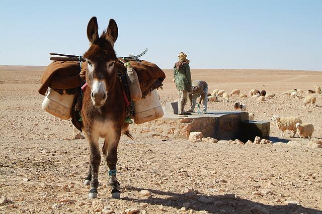 utazás tunézia